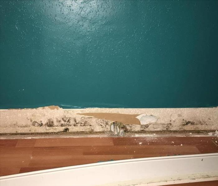 Mold growth in Covington home  Before
