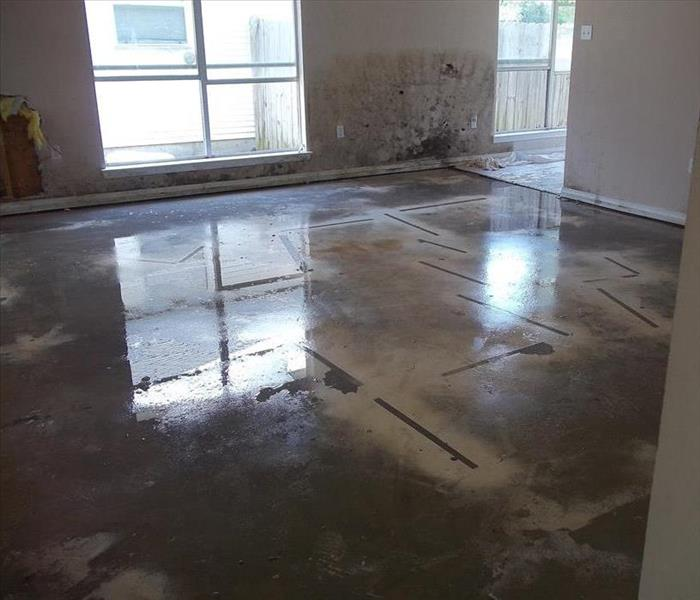 empty room with concrete base-floors and mold on back walls