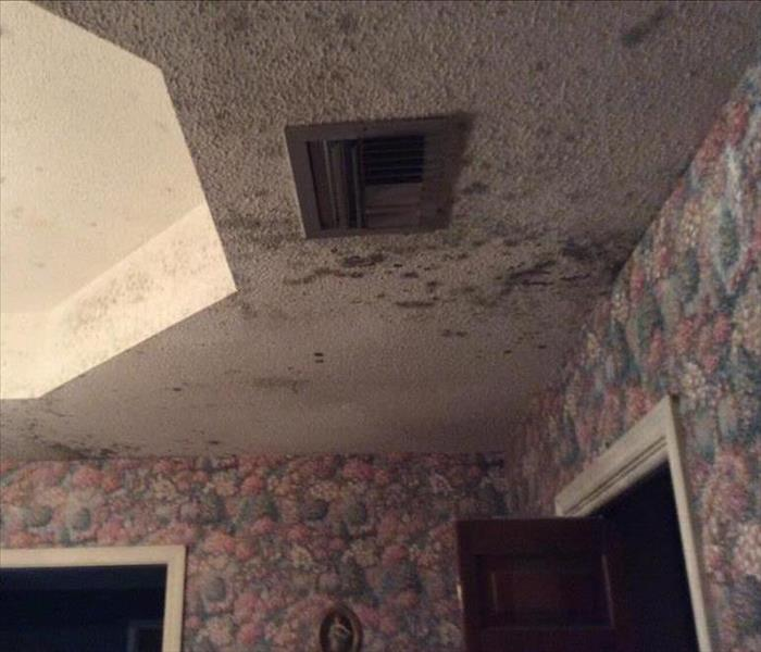 Louisiana Humidity And Mold Growth In Your Home Servpro