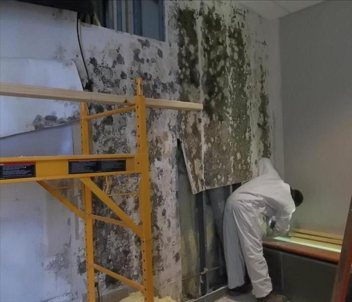 Mold Remediation Moisture Control is the Key to Mold Control